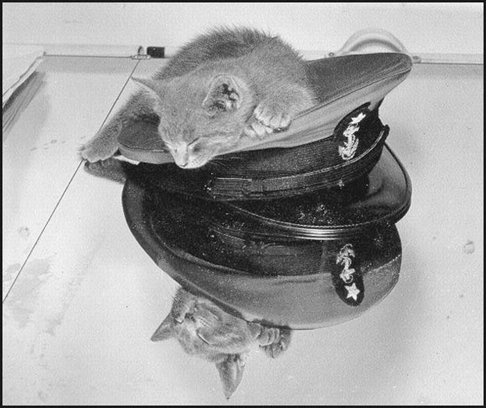 Коты-матросы (14 фото)