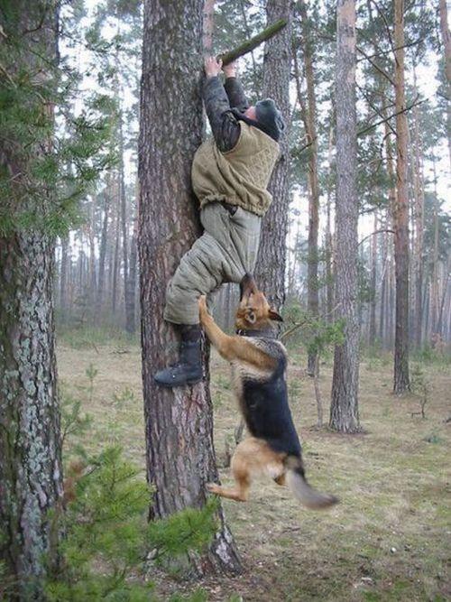 Люди против животных (44 фото)