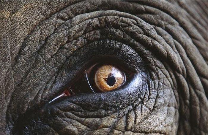 Угадайте животное по глазам (25 фото)