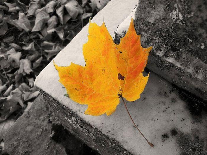 Красивые фотографии с частичным цветом (33 фото)