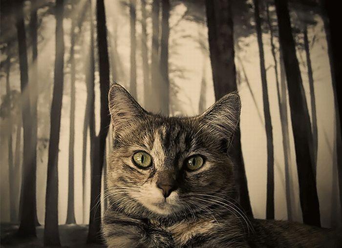 Классные фотографии животных (27 фото)