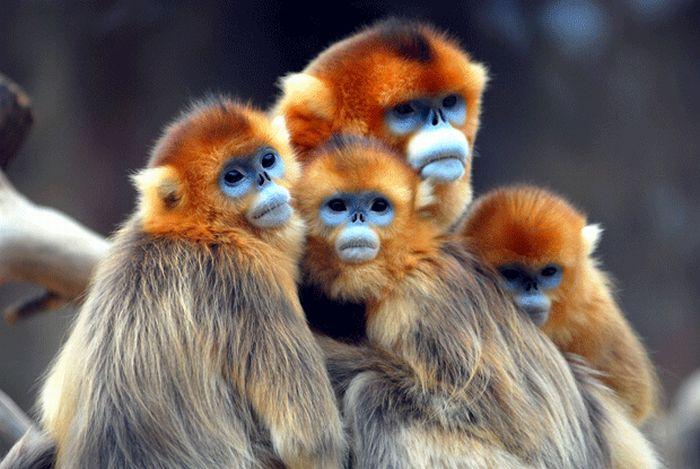 Классные фотографии животных 27 фото