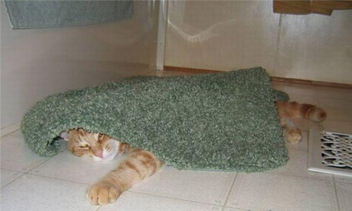 Кот, который любит отдыхать (14 фото)
