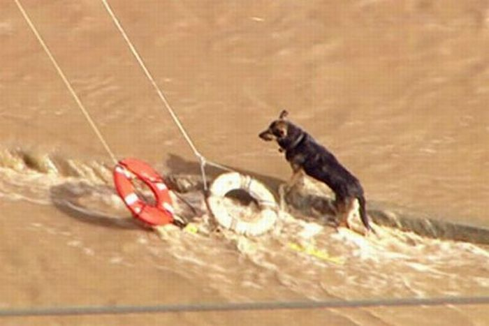 Спасение собаки из реки (15 фото)