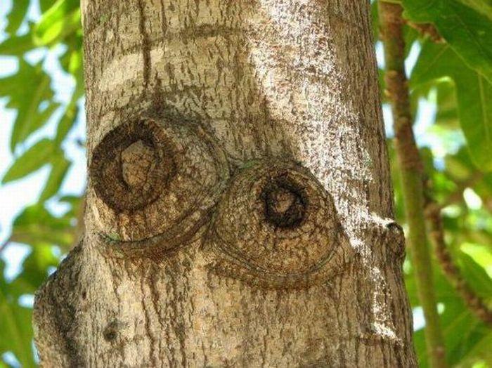 Prikolisi ru сексуальные деревья