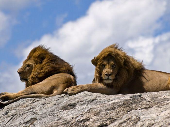 Красивая Африка (26 фото)