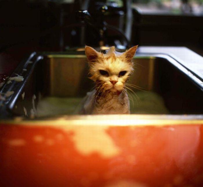 Коты в умывальниках (33 фото)
