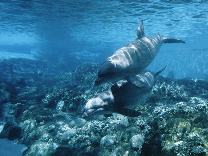 Красивые подводные фотографии (40 фото)