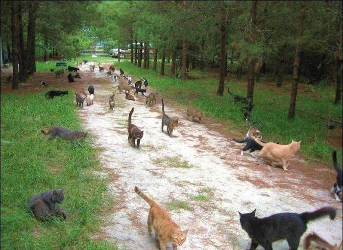 homeless cats 01 Peternakan Kucing