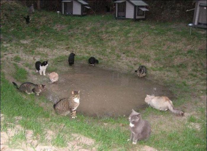 homeless cats 03 Peternakan Kucing