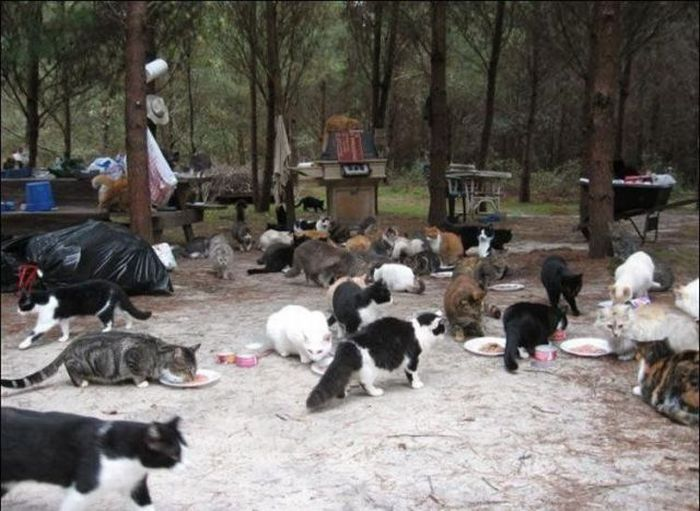 homeless cats 04 Peternakan Kucing