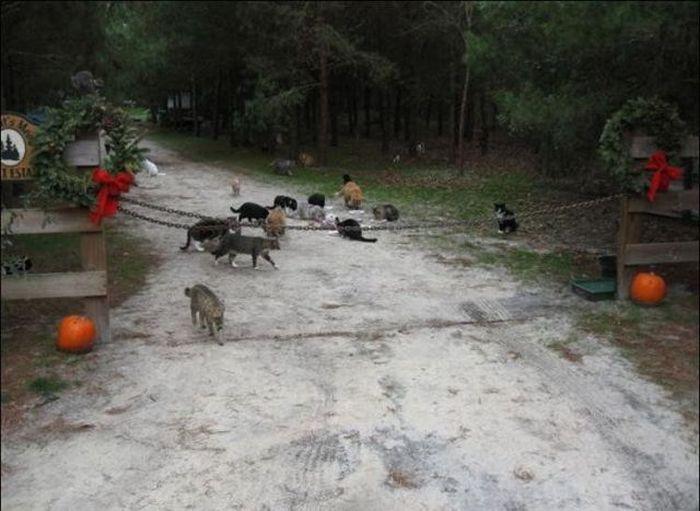 homeless cats 05 Peternakan Kucing