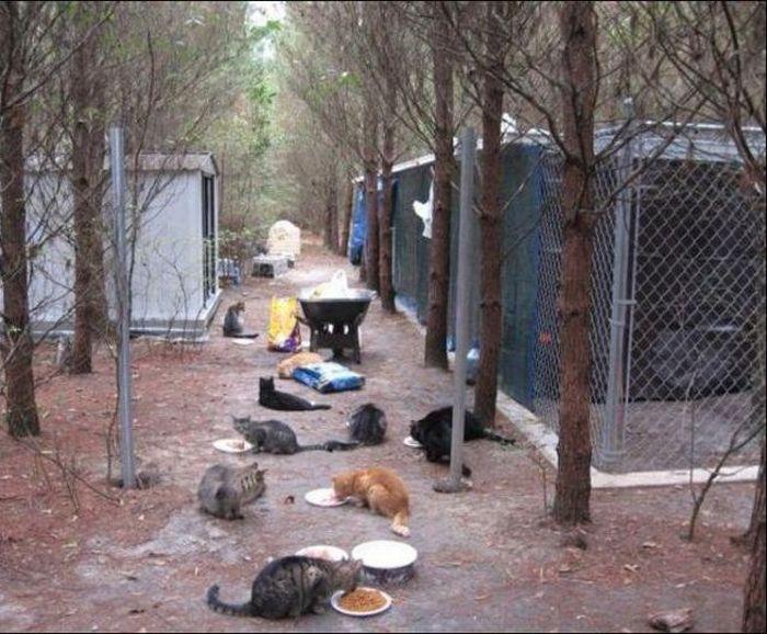 homeless cats 06 Peternakan Kucing