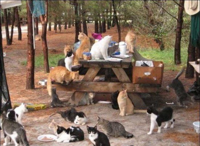 homeless cats 07 Peternakan Kucing