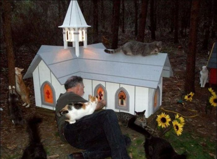 homeless cats 12 Peternakan Kucing