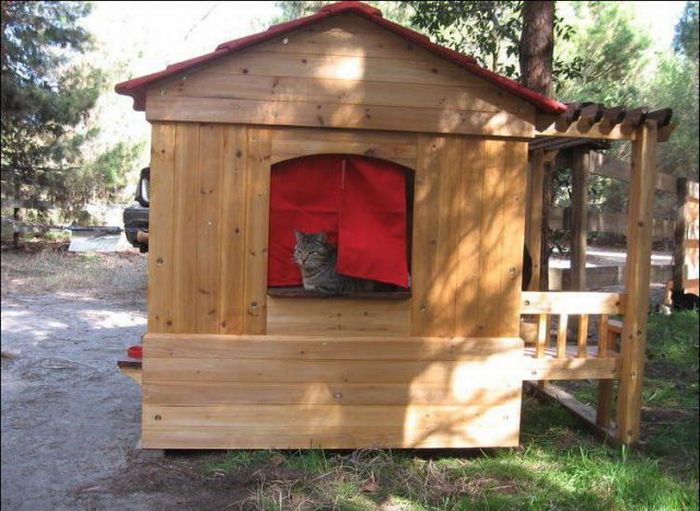 homeless cats 13 Peternakan Kucing
