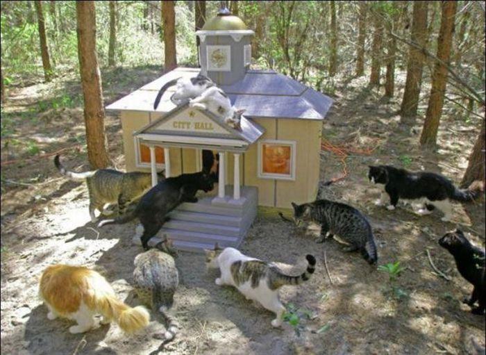 homeless cats 17 Peternakan Kucing