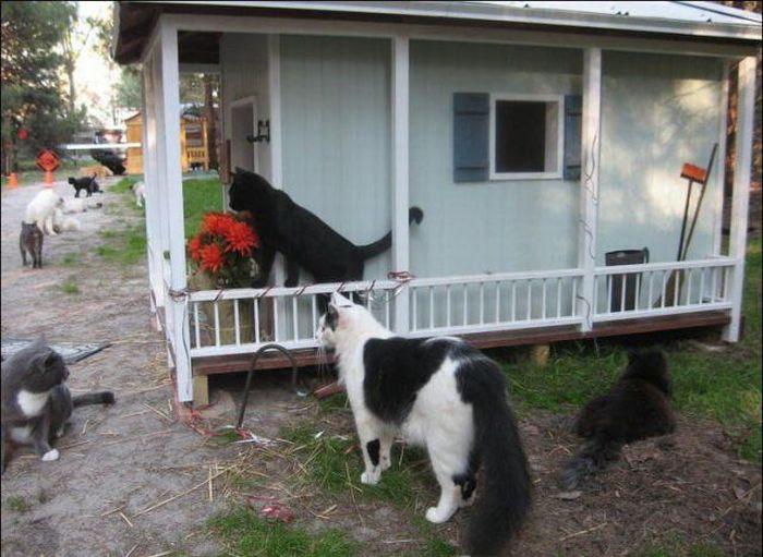homeless cats 18 Peternakan Kucing
