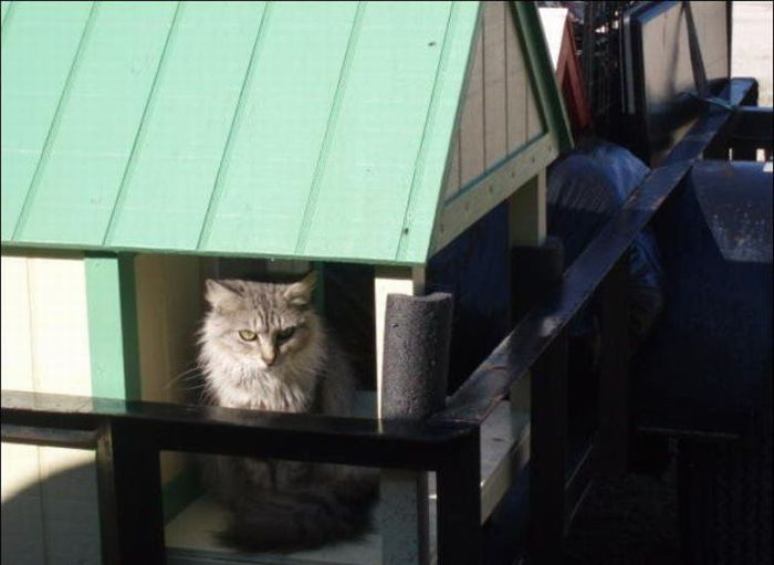 homeless cats 25 Peternakan Kucing