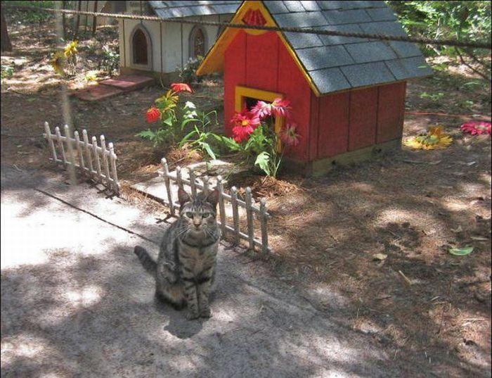 homeless cats 34 Peternakan Kucing