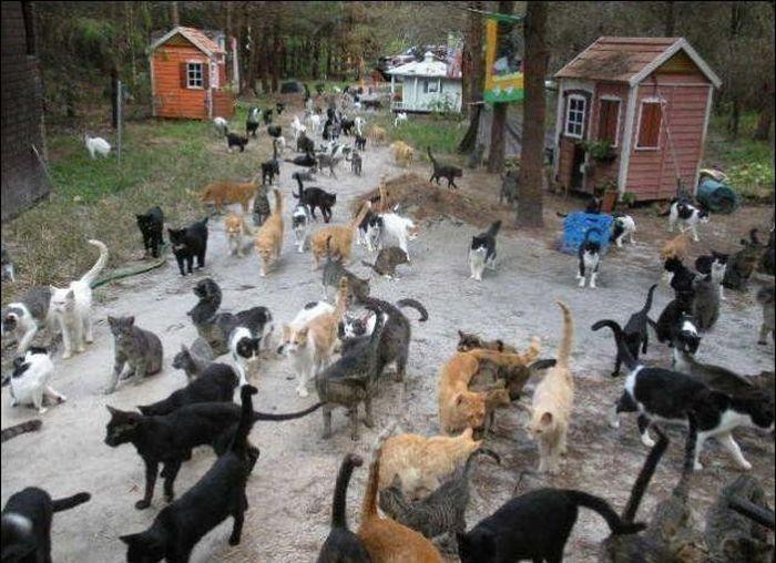 homeless cats 39 Peternakan Kucing