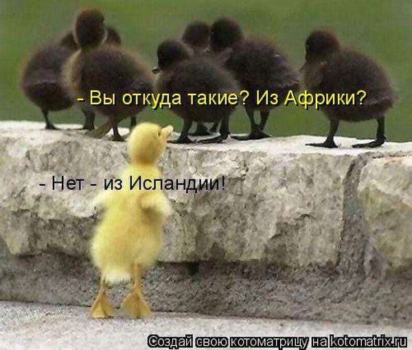 http://ru.trinixy.ru/pics4/20100507/kotomatrix_11.jpg