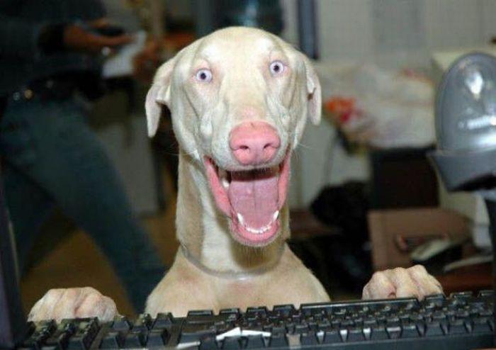 Самые смешные эмоции животных 60 фото