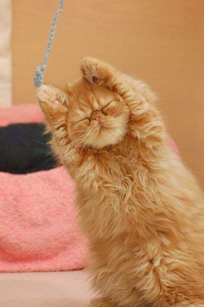 Самые смешные эмоции животных (60 фото)