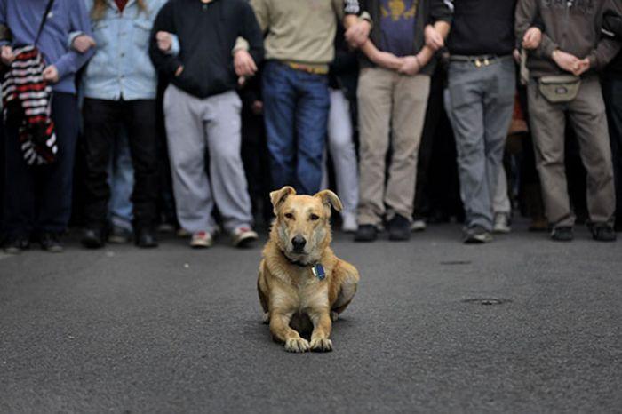 Собачий протест (27 фото)