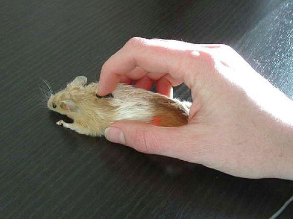Необычные компьютерные мышки (19 фото)