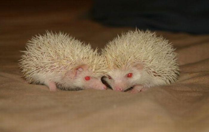 фото родившихся ежиков для настоящих эстетов