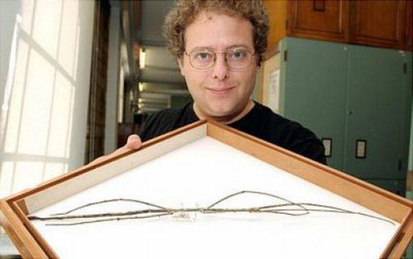 Самое длинное насекомое в мире (11 фото)