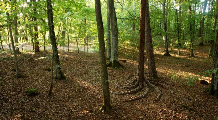 Креативный дизайн леса (14 фото)
