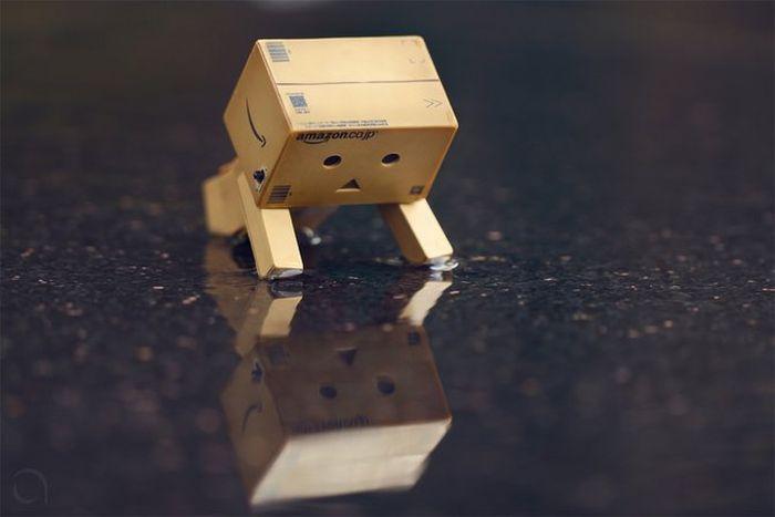 Жизнь коробочек (18 фото)