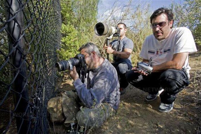 Тяжелая жизнь папарацци (42 фото)