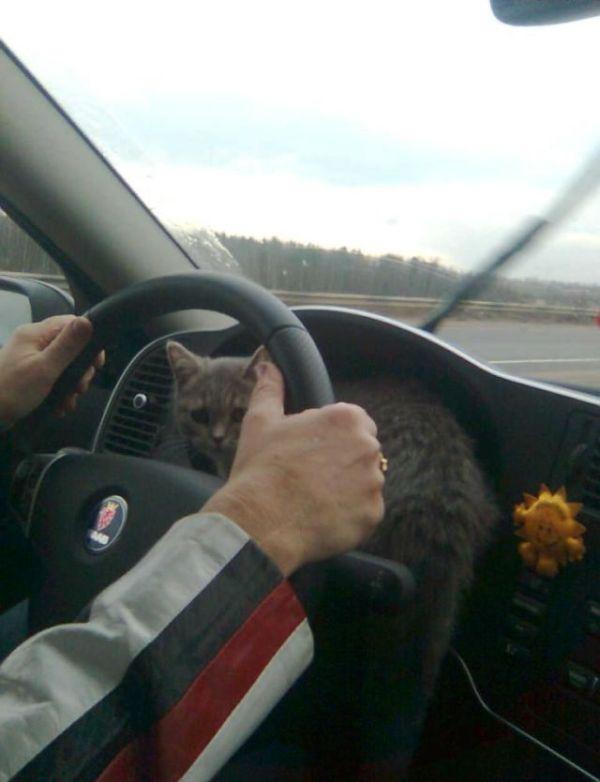 Кот-навигатор (6 фото)