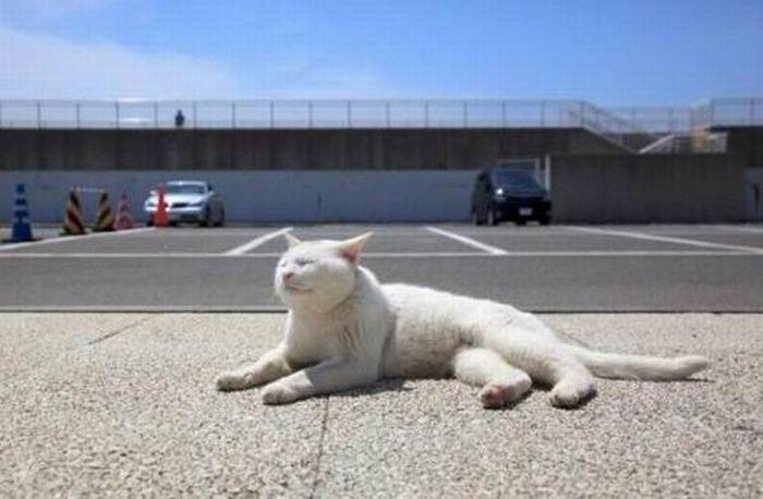 Такой ленивый кот (5 фото)