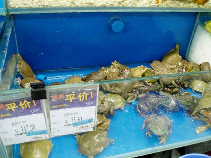 Что продается в китайских супермаркетах (15 фото)