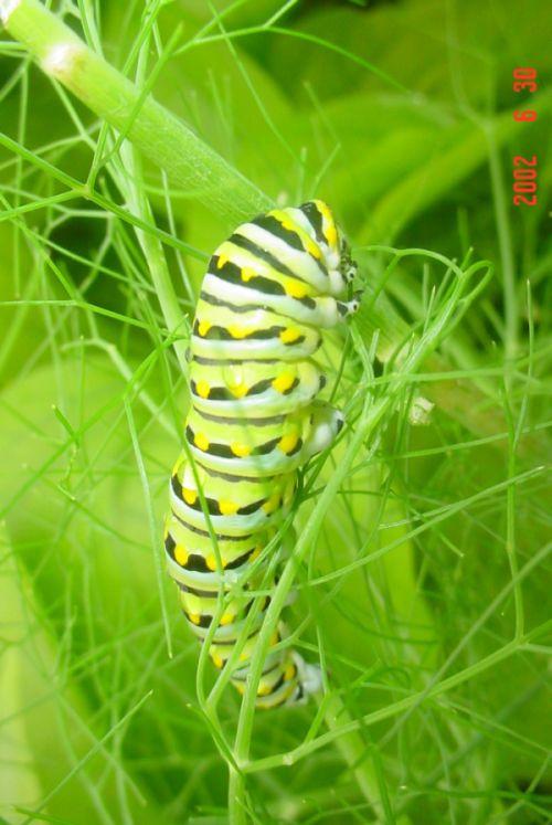 Классная гусеница (12 фото)