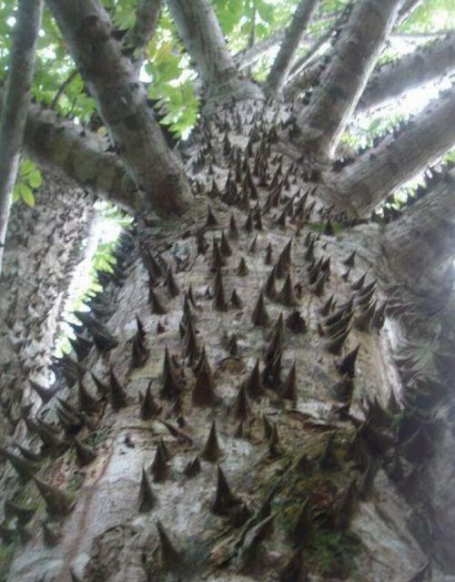 Опасные деревья (20 фото)