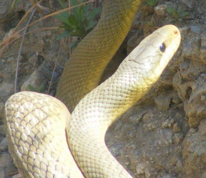 Сонник Змея приснилась к чему снится во сне Змея