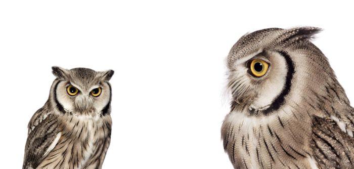 Потрясающие фотографии птиц в движении (10 фото)
