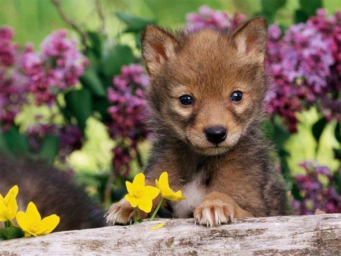 Позитив дня. Маленькие животные (20 фото)