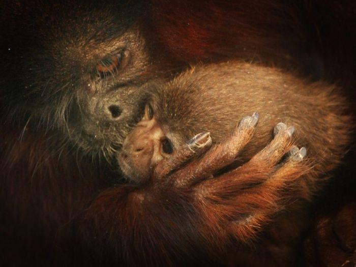 Родители-животные с детьми (24 фото)