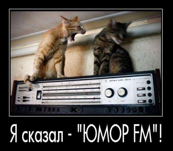 http://trinixy.ru/pics4/20100528/demotivatori_76.jpg