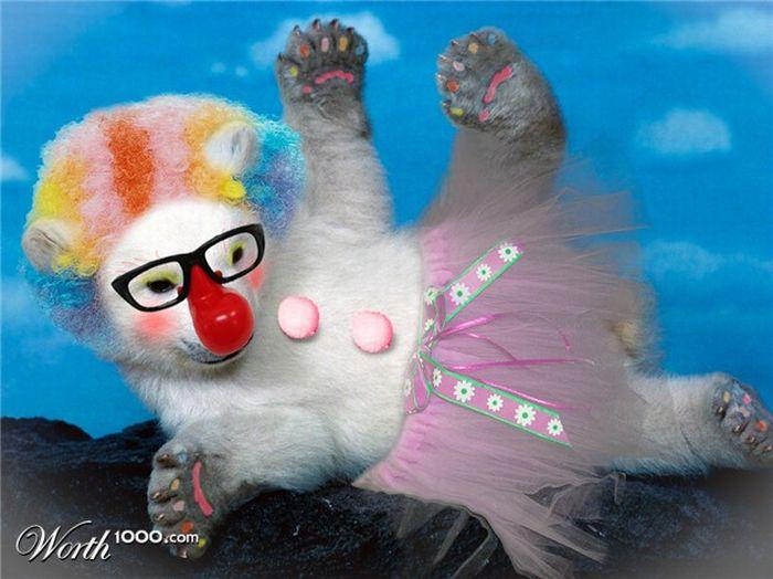 Животные-клоуны (20 фото)