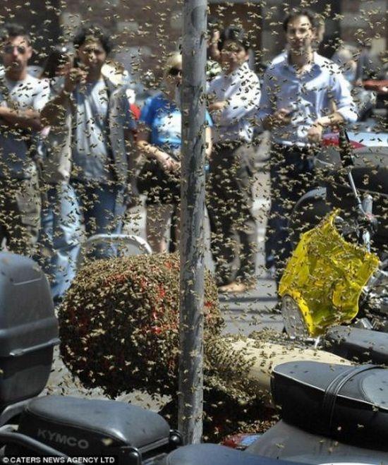 Пчелы напали на скутер (4 фото)