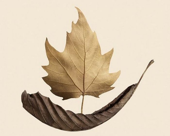 Классные работы из сухих листьев (18 фото)