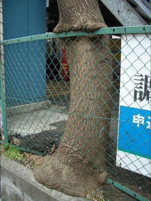 Сила деревьев (25 фото)