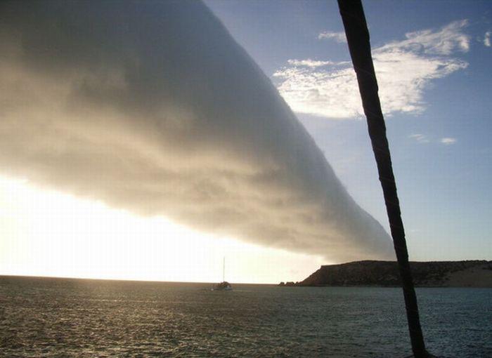 Утренняя глория (11 фото)
